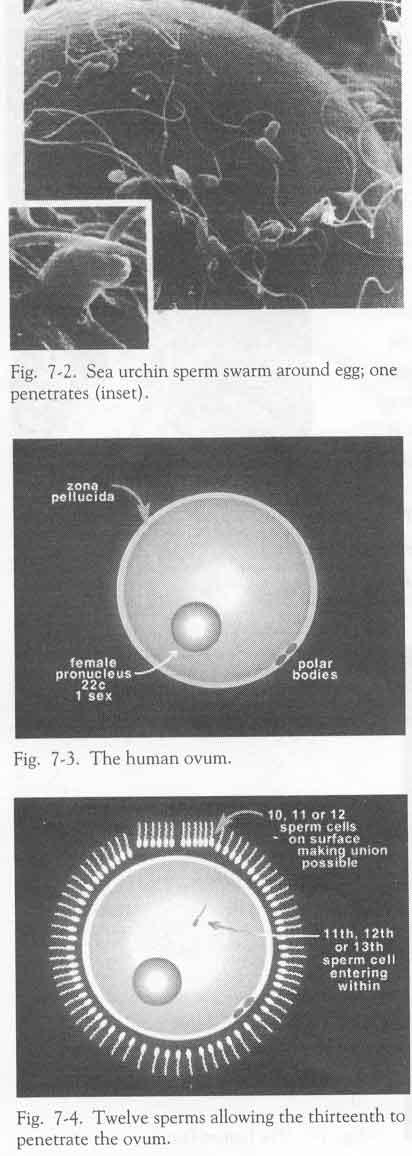 Внутри все в сперме фото 189-813